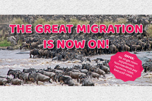 THE GREAT MIGRATION IS ON!