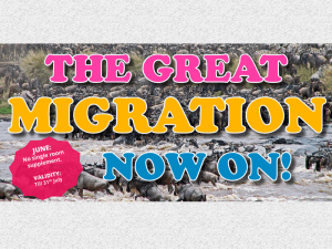 THE GREAT MIGRATION 2021